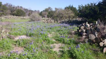 Springtime in Texas!